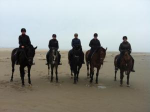 paarden op Texel